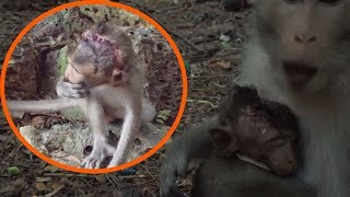 Pity monkey, Mom is difficult to finding food because her baby hurt head, Poor baby monkey, TM# 351