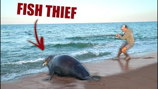 ENORMOUS 700lb SEAL SNATCHES MY FISH!! (Beach Fishing In Nantucket)