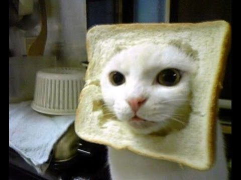 FUNNY VIDEOS: Funny Cats - Funny Cats Compilation - Funny Animals - Best Cute Cat Videos 4