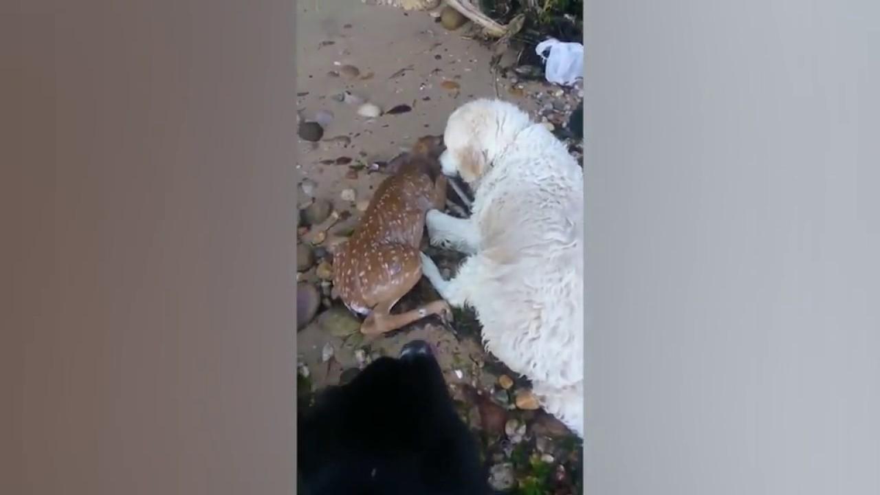 На Урале собаки спасли пропавших в лесу детей