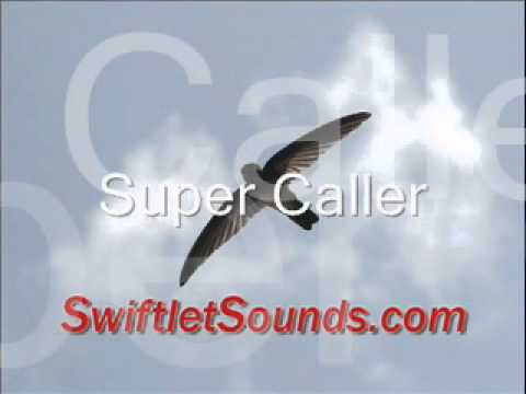 Swiftlet Sound - Super Caller External Sound video