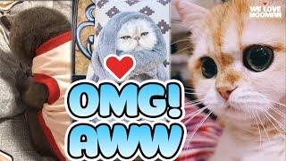 *OMG AWW* 🐶 FUNNY DOG & FUNNY CAT 😸 CUTE DOG & CUTE CAT - Tik Tok   We Love Hooman ❤️