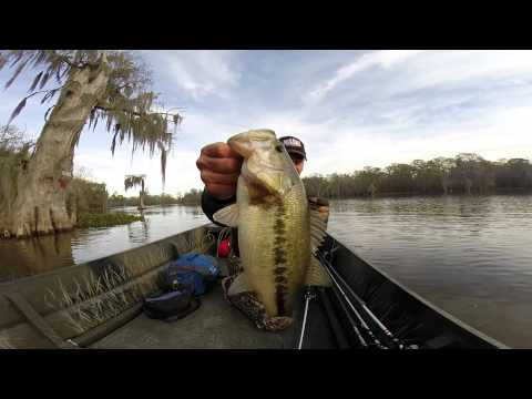 Winter Bass Fishing in South Louisiana