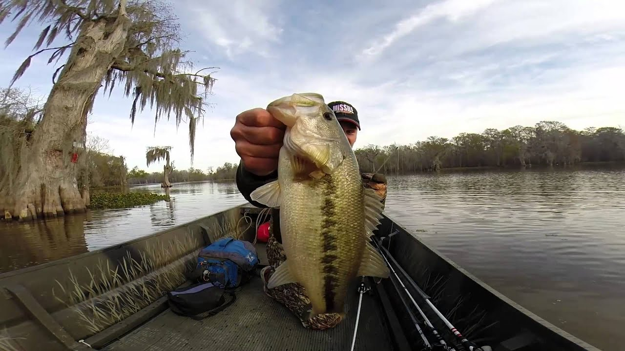 Winter bass fishing in south louisiana youtube for Fishing license for disabled person