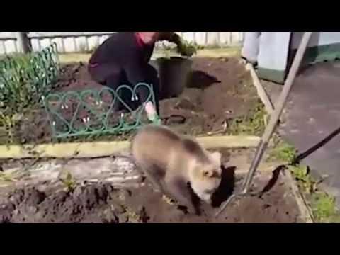 Медвежонок помогает женщине в хозяйстве))