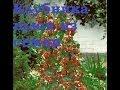 Пророщенные семена бамбука и клубники вьюн . Посылки с АлиЭкспресс . Часть 3-я