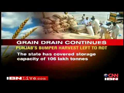 India's food grains left to rot