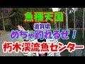 ☆水中バイトシーン・魚種天国 釣れるぜ!「朽木渓流魚センター」