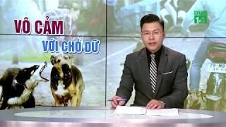 Cháu bé 12 tuổi ở Thanh Hóa bị cắn mất tai đã qua cơn nguy kịch | VTC14