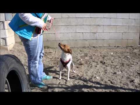 Animalinneed: Video of Penny