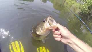 Black Bass on Belly Boat 2 (Gopro HD)