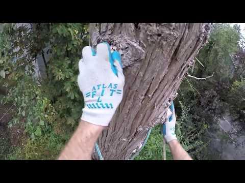 猫は木登りが得意だけど降りるのは難しい。