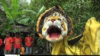 Download Song NGERI ..... LIHAT SINGO BARONG MAKAN SANG PENGANTIN SAMPAI MENANGIS Free StafaMp3