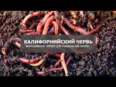 Выращивание червей как бизнес