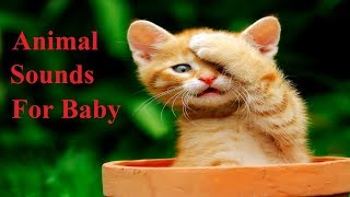Animal Sounds for Kids ~ Easy Away Learn animal Name & Sound For children & Baby