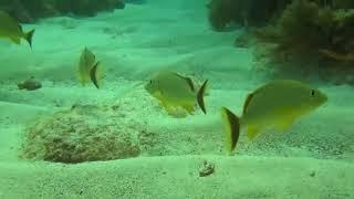 Мир дикой природы  Багамские острова  Документальный фильм