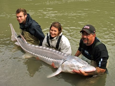 Fishing with Rod:  First white sturgeon