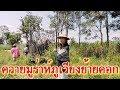 ควายมูร่าห์ภูเวียงย้ายคอก Murad Phu Wiang