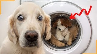 Funny Dog - Cute Is Not Enough - Funny Dogs Best Video Compilation
