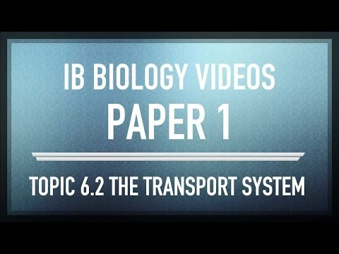 (6.2) The Transport System - IB SL Biology Past Exam Paper 1 Questions