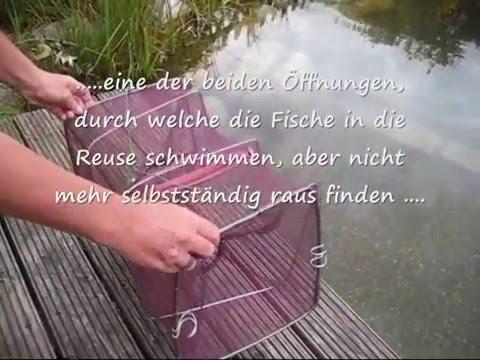 Fischreuse - Verwendung Im Gartenteich