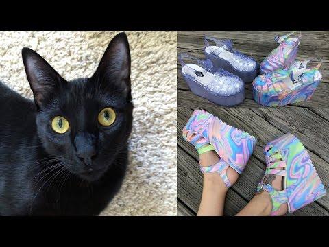TEA VLOG!- CATS & SHOES