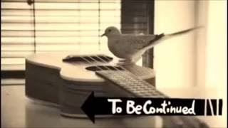 Bird playing roundabout XD