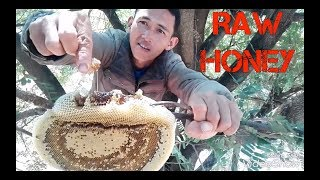 RAW HONEYCOMB LIVE FROM TREE