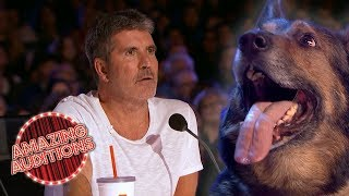 UNEXPECTED SMART Animal Auditions on Got Talent | Amazing Auditions