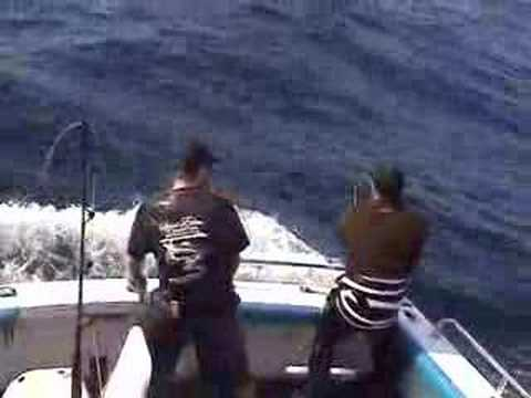 rough day marlin fishing