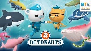 3D Underwater world with Octonauts