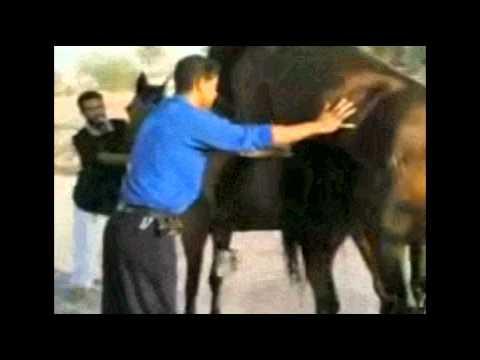 Horse Sex Fails video