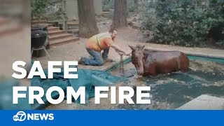 Horse found safe in Paradise pool after Camp Fire blazes through area