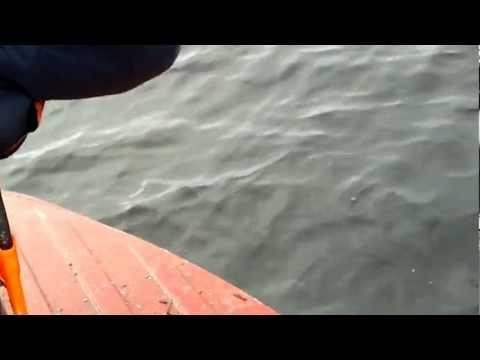 ловля на продольники рыбы видео