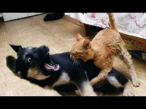 Dog And Cat Fight Funny Videos