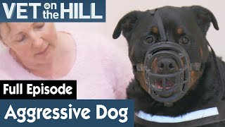 🐶 Extremely Aggressive Dog Must Be Masked | FULL EPISODE | S02E03 | Vet On The Hill