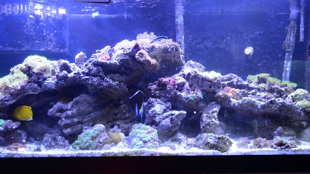 Achilles Tang Care 2 Update Achilles Tang