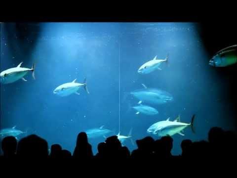 Sea Life Park Tokyo Tuna Fish