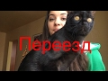 Переезд в Москве. Поиск квартиры с котом