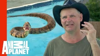 Face-to-Face with a Cottonmouth Snake