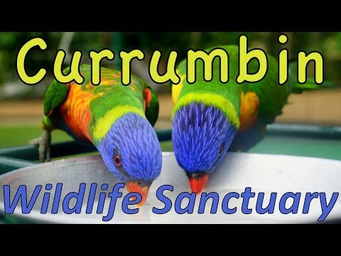 Australian Animal Encounters at Currumbin Wildlife Sanctuary