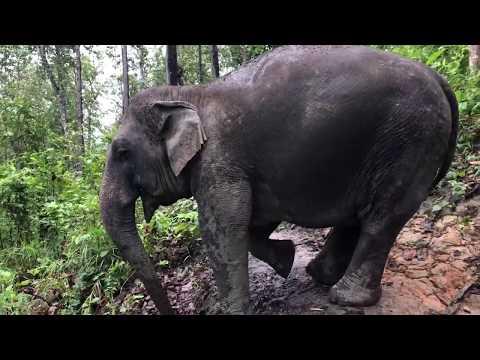 Mi az elefántokkal vagyunk, és te?