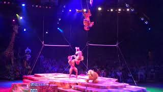 Festival of the Lion King SHOW @ Walt Disney World