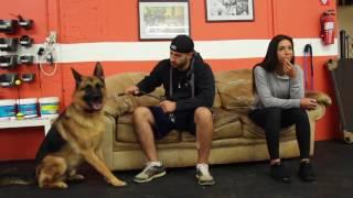 Training   Kobe Board and Train Drop Off - Last Resport   Solid K9 Training Dog Training