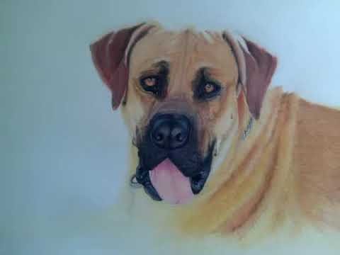 Pastel Pencil Dog Portrait Drawing
