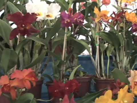 Qual o melhor substrato para orquídea?
