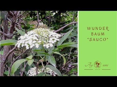 """Wunderbaum """"Sauco"""""""