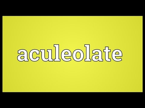Header of Aculeolate
