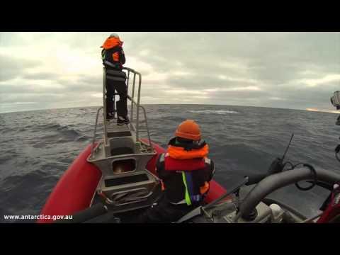 Australia's successful Antarctic blue whale voyage