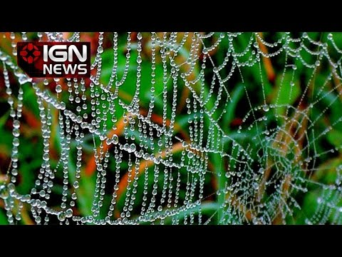 Spider Silk May Be Used To Grow New Hearts In The Future - Ign News video